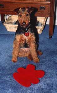 welshterrierremi
